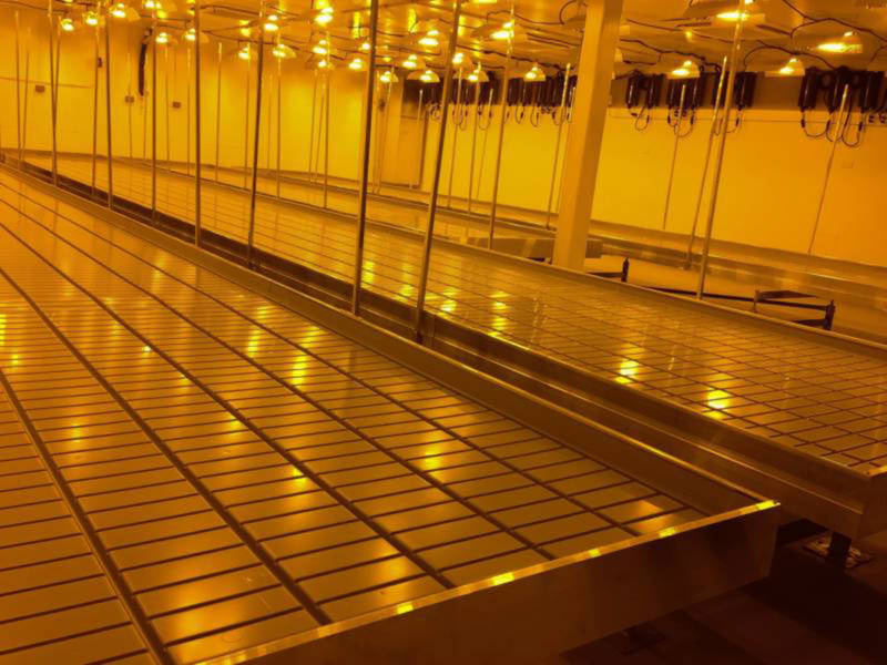 One of the gymnasium-size grow rooms at Pegasus Nevada.