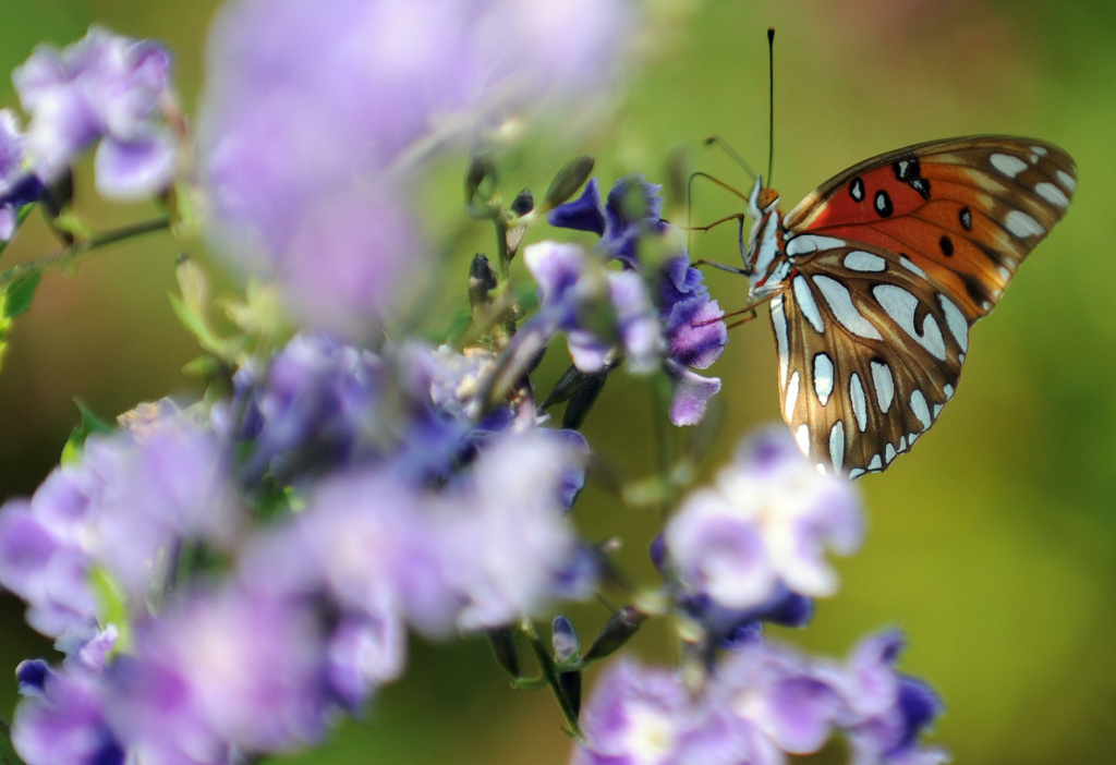 A butterfly sits atop a flower in Los Angeles, California.