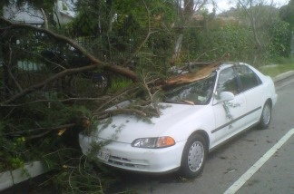 Valley Village resident Ellen Scott hopes she'll get some help from the city. A tree fell on her white sedan during the storm on March 20, 2011, and she has no comprehensive insurance.