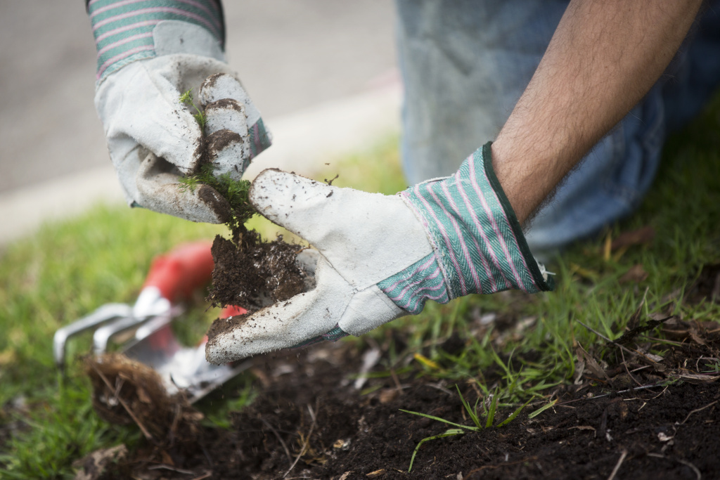 File: Lionshares volunteers pull weeds around stressed urban trees during one of Tree People's urban forestry events at Cheviot Hills Park on Friday morning, June 5, 2015. Losing mature trees not only hurts the eco-system, it also can cause local temperatures to rise and home values to drop.
