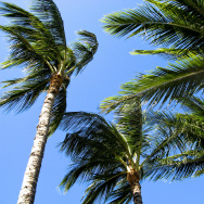 palm tree wind windy