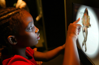 File photo: A student looks over a frog on a virtual frog dissection display at 'Frogs: A Chorus of Colors' at the American Museum of National History May 25, 2004 in New York City.