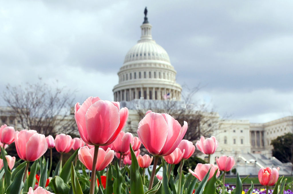 Flowers are in full bloom in front of the U.S. Capitol in Washington, DC.