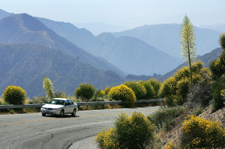 A motorist drives between flowers as a heavy wildflower bloom, the result of last winter's record rainfall, continues on the first day of summer along the Angeles Crest Highway on June 21, 2005 in the Angeles National Forest northwest of La Canada, California.