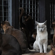 MYANMAR-LIFESTYLE-ANIMALS-CATS