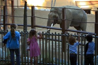 Children watch Billy, the only elephant then at the Los Angeles Zoo, in his temporary exhibit after the Los Angeles City Council voted to keep Billy at the zoo and continue construction of the $42 million Pachyderm Forest elephant exhibit on January 28, 2009 in Los Angeles.