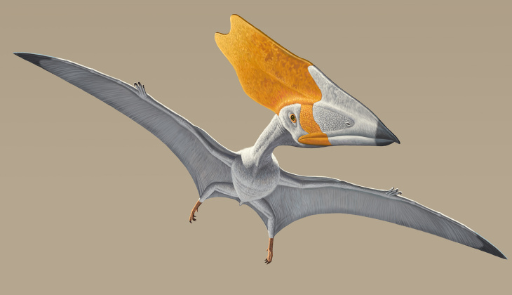 The colossal Tropeognathus mesembrinusmodel, with a wingspan of more than 25 feet, soars overhead at the entrance to the Pterosaurs: Flight in the Age of Dinosaurs exhibition.
