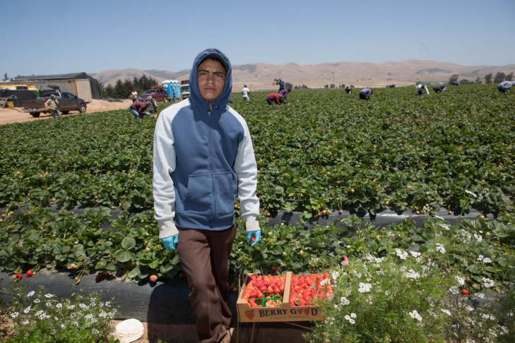 Walmart Strawberry Supply Chain