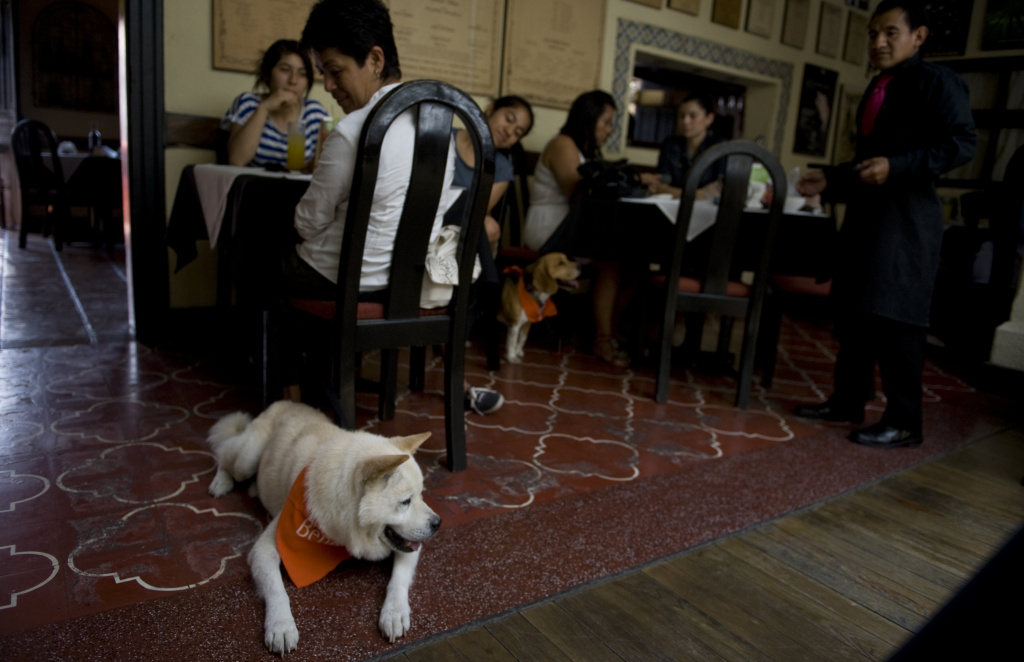 Two dogs rest while their owners eat in a restaurant on April 29,2012 in Antigua, Guatemala.