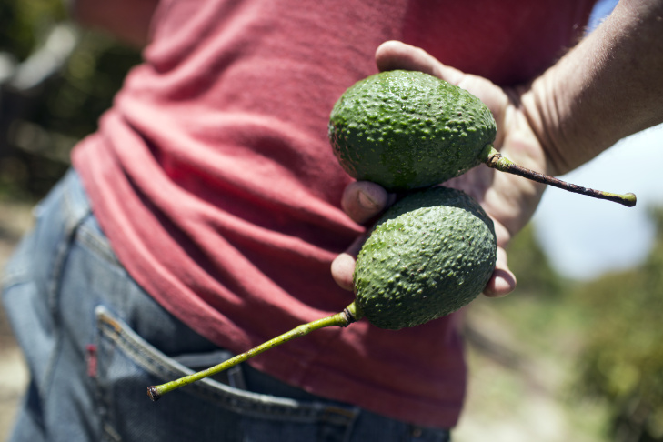 Chris Sayer is manager of Petty Ranch in Saticoy, Calif.  The drought is expected to continue in California this summer, which means more difficulties for avocado growers.