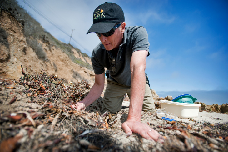 David Hubbard, a research specialist at UCSB's Marine Science Institute, looks for crustaceans called Isopods on a Malibu beach on July 24. Hubbard and a group of scientists have found that the Isopod population has disappeared from 60 percent of Southern California beaches.