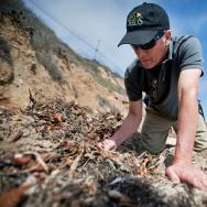 Malibu Beach Isopods - 1