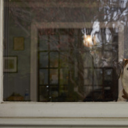 "DOWNWARD DOG - ABC's ""Downward Dog"" stars Ned as Martin. (ABC/Craig Sjodin)"