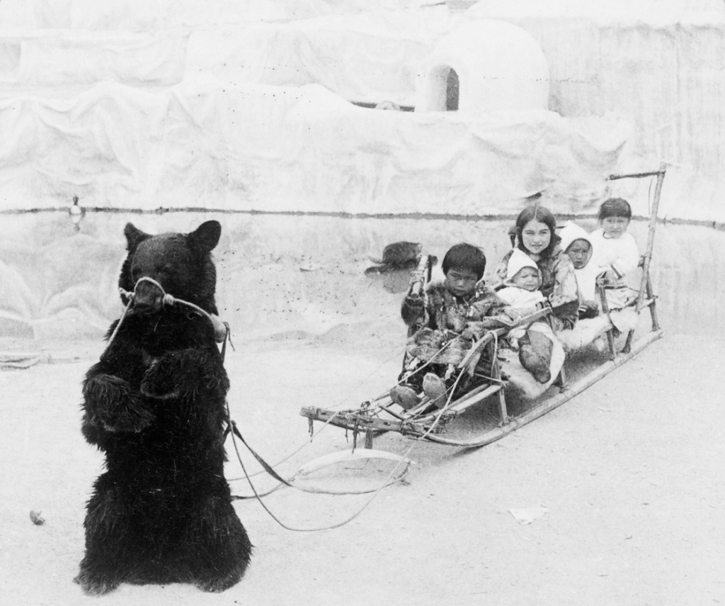 Playmates from the frozen Arctic—Eskimo youngsters and their tame bear, World's Fair, St. Louis, Mo.