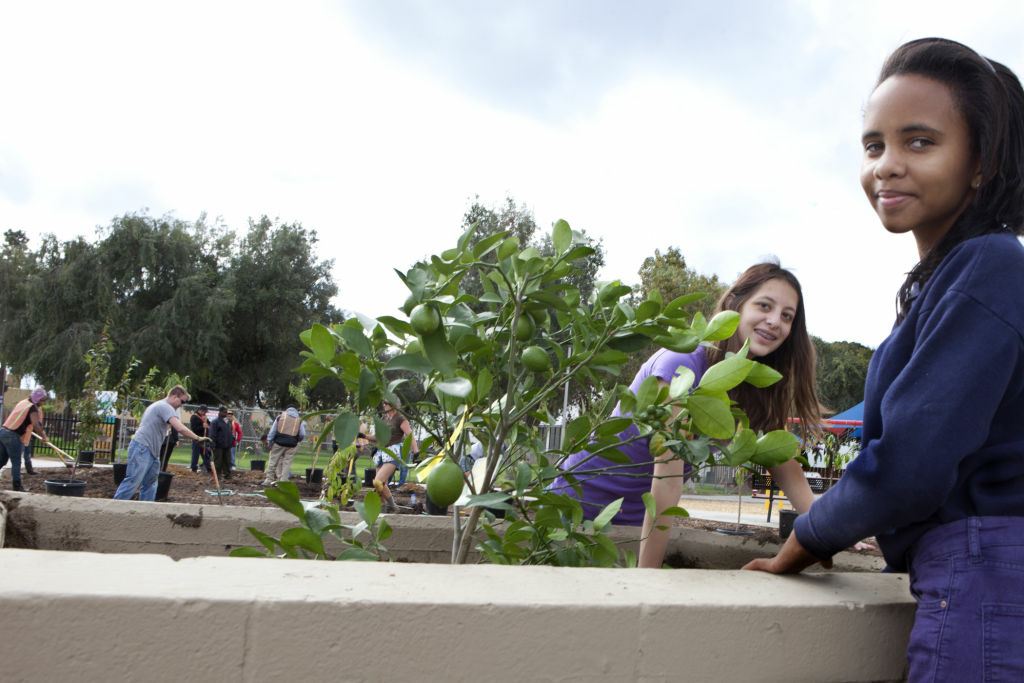 Kids plant lemon trees at the Del Aire Public Fruit Park in Southern California.