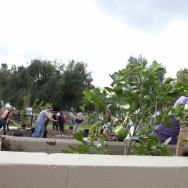 Del Aire Public Fruit Park
