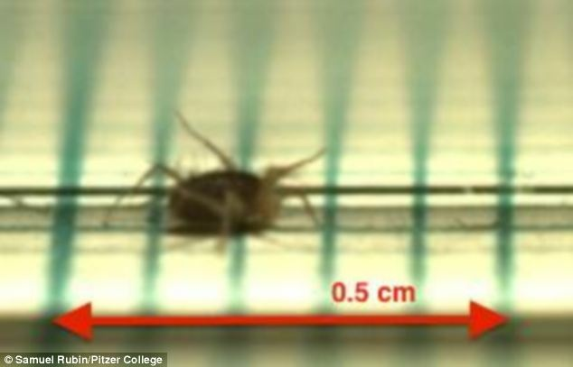 A Southern California mite holds the record for the world's fastest land animal.