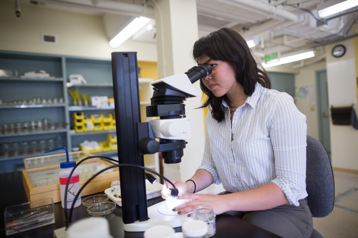 Kelsey Bailey, a political science major, looks under the microscope in a lab at the Natural History Museum. As of now, the BioSCAN project is using museum staff and USC students to sort the collected insects. Later this summer, the museum will begin accepting volunteers from the public to help out as well.