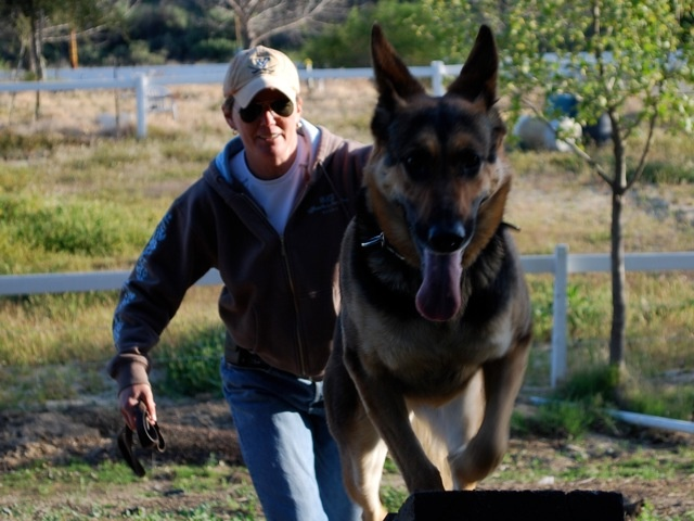 Indiana Bones is an eight-year-old German Shepherd who is a full-time cadaver dog for the Los Angeles County Coroner's office.