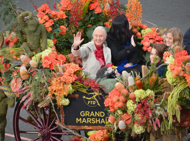 The Sweepstakes Trophy winner on the parade route during the 124th Rose Parade Presented By Honda on January 1, 2013 in Pasadena, California.