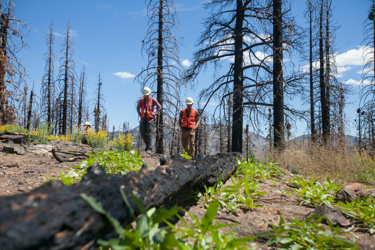 US Forest Service crew members Paris Krause and Michael DeNicola walk along a high intensity burn area (mostly dead Jeffrey pines and White firs) one year after the Lake Fire in the San Bernardino National Forest on Wednesday, July 20, 2016.