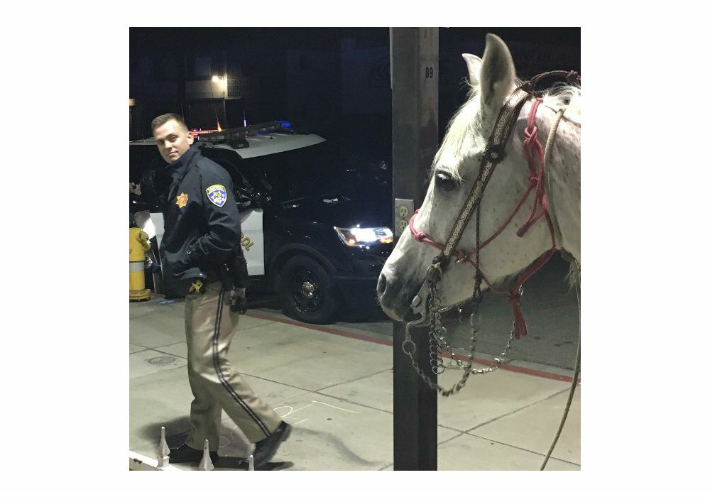 A CHP officer looks at a horse on Saturday, February 24, 2018, after a man was spotted riding it on the 91 freeway in Long Beach. The man was given a sobriety test and arrested.