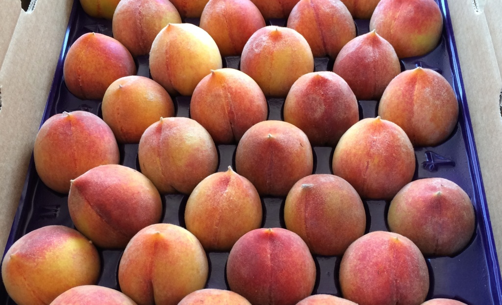 Peaches from Masumoto Farm based in Del Rey, just outside of Fresno. The farm has fallowed fields and is experimenting with more sustainable methods of growing crops in response to California's drought.