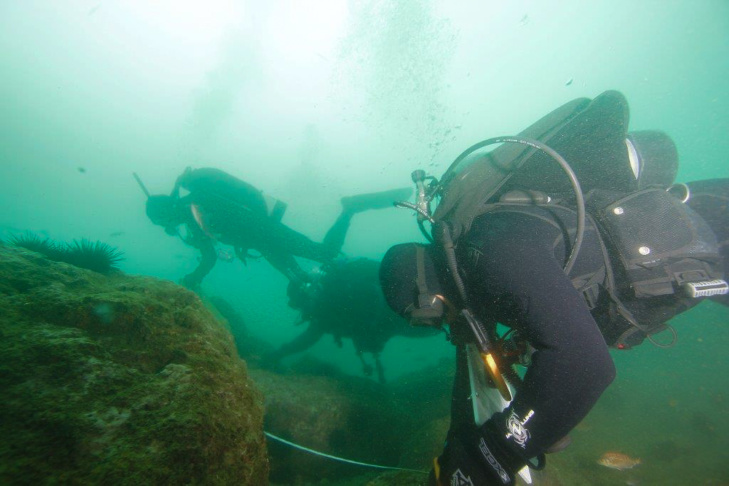 Urchins Kelp Forest Restoration