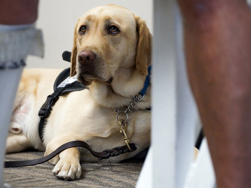 The number of pets on planes have become a hot-button issue of late as emotional support animals have become more prominent than ever.