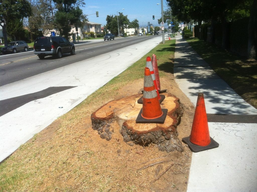 Inglewood chopped down about 128 trees to clear the way for Space Shuttle Endeavour's planned trek through South LA streets on October 12. LA will clear away 265 trees.