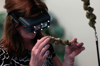 File photo:   A woman wearing special magnifying glasses inspects a sample of marijuana at the Cannabis Crown 2010 expo on April 18, 2010 in Aspen, Colorado.