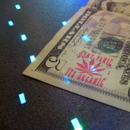 money cash marijuana stamp organic