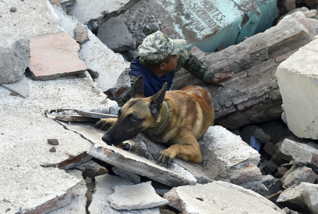 Soldiers with specially trained dogs search for survivors amid the ruins of buildings knocked down after a 8.1-magnitude quake in Juchitan de Zaragoza, Oaxaca on September 7, 2017.