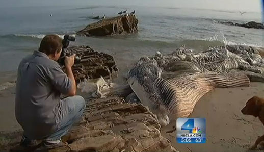 A shot taken from NBC LA video of the whale in Malibu.