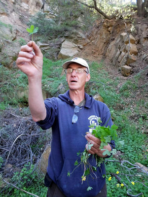 "Pascal Baudar, seen on a foraging hike, is the author of ""The New Wildcrafted Cuisine."""