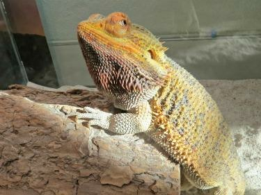 Kidspace Children's Museum - Animal Homes Special Activity Series: Lizards