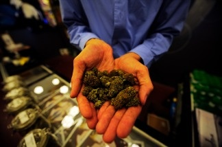The manager of Sunset Junction medical marijuana dispensary holds up marijuana plant buds in Los Angeles, California.