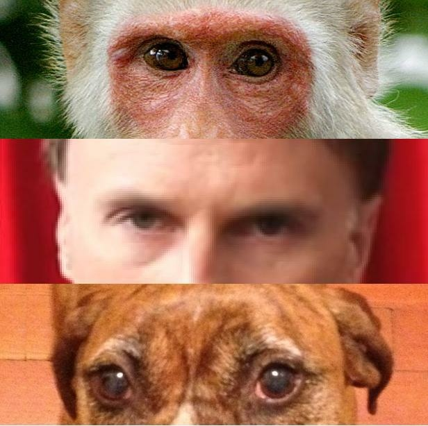 New research indicates that dogs may have been able to follow homo sapiens eye direction in order to help them hunt. (From top to bottom: primate eyes, human eyes, dog eyes.)
