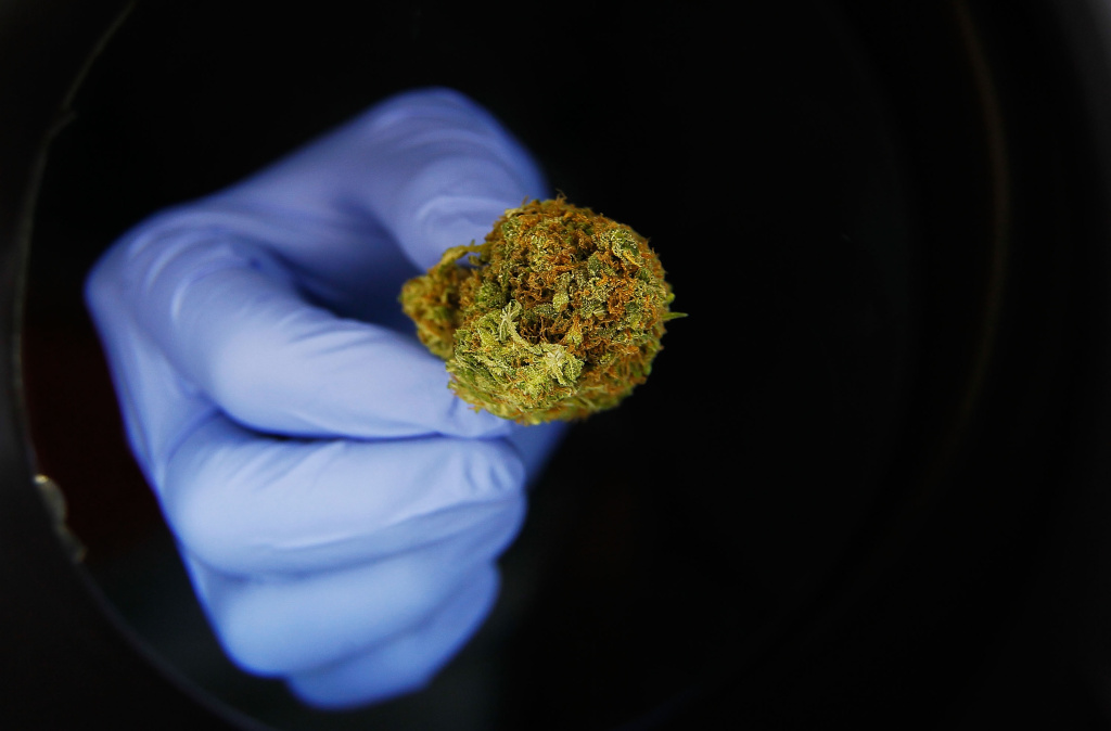 A portion of marijuana is seen under a magnifying glass at