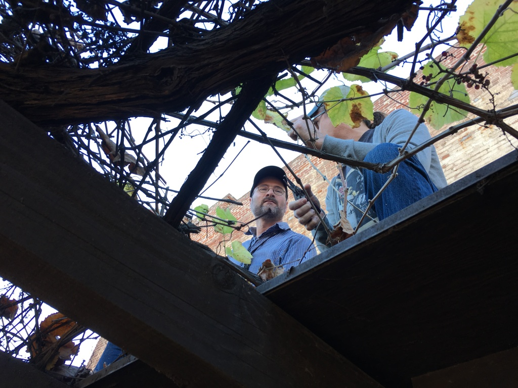 Winemakers Michael Holland and Wes Hagen working with the Olvera Street vine.