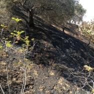 Glendale Fire