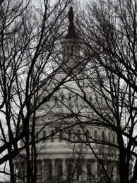 The U.S. Capitol is seen through bare trees on January 7, 2011 in Washington, DC.