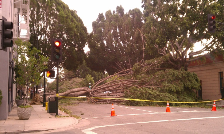 Santa Ana winds damage Green St.