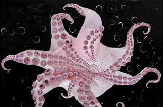 Tim Hawkinson, Octopus.