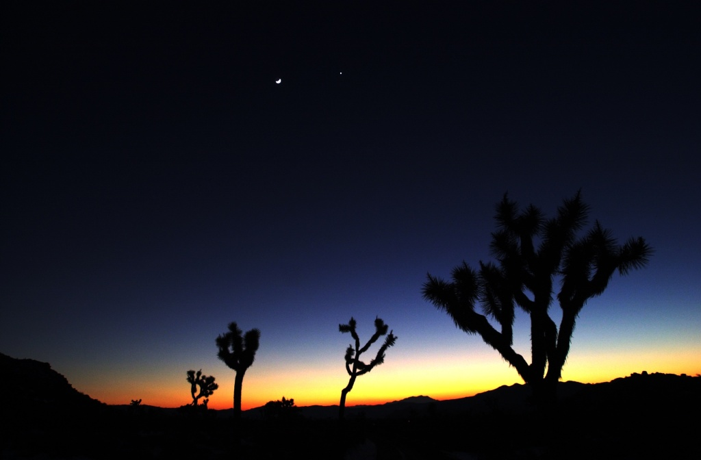 The moon and Venus shine beyond joshua trees under a storm-scoured sky in Joshua Tree National Monument, January 28, 2000, as a cold front moves out of southern California leaving snow in the desert and skies of blue.