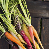 Colorful carrots were originally an experiment by the USDA to put more nutritious elements in food.