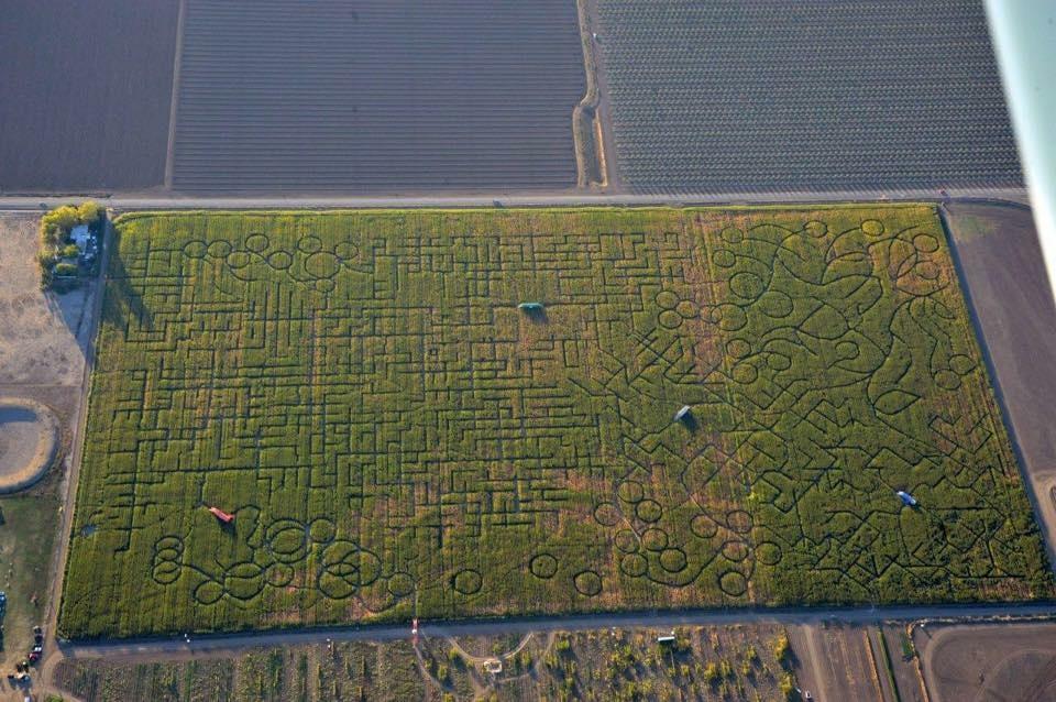 The 2014 corn maze at Cool Patch Pumpkins in Dixon, CA.