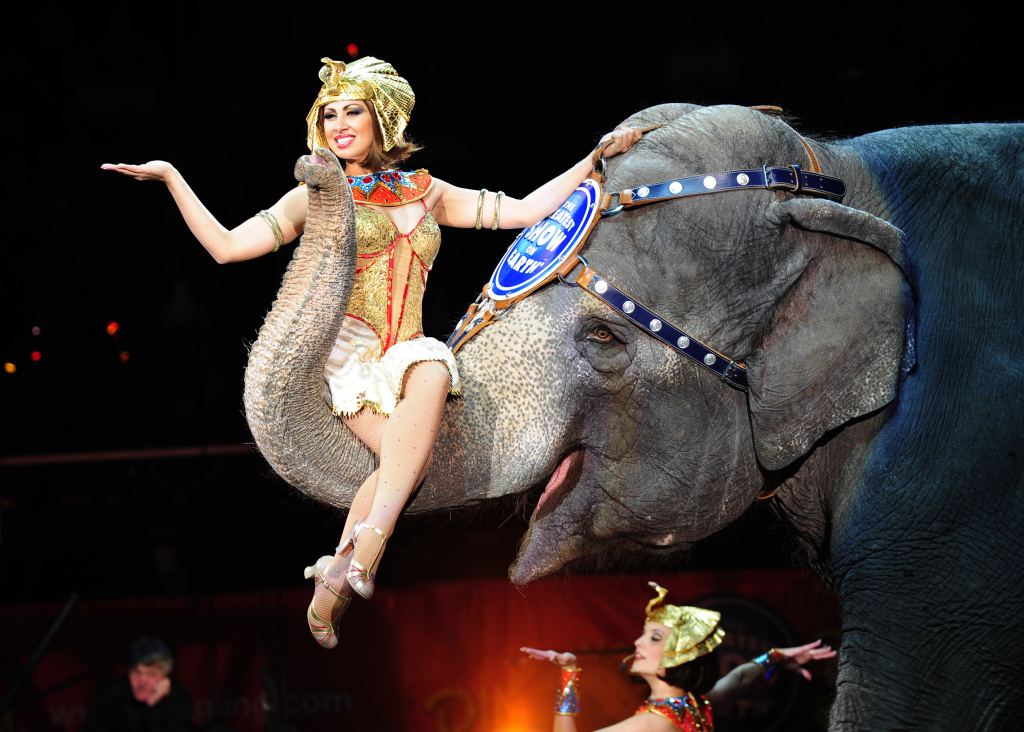 Circus artists and elephants perform during Ringling Bros. and Barnum & Bailey's FUNundrum in New York on March 26, 2010.