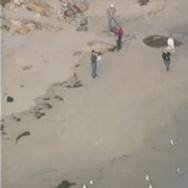 Malibu Whale Carcass