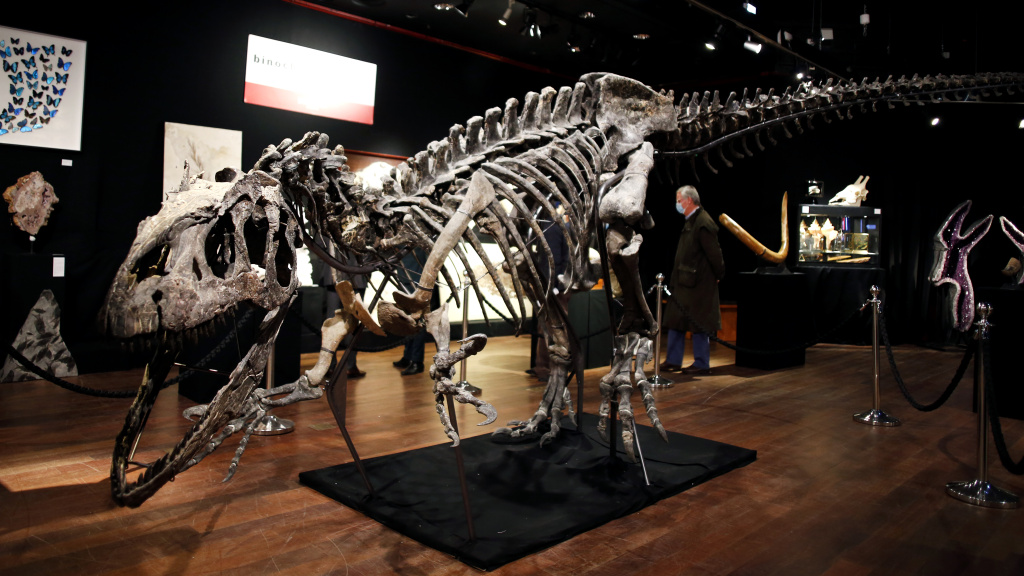 A skeleton of an allosaurus dinosaur on display at Drouot auction house in Paris in October. A new theory says the dinosaurs were killed by a comet fragment that originally came from the edge of the solar system.